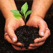 Удобрение субстратное ГУМУС компостный листовой