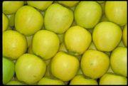 Яблоки из Молдовы по самым низким ценам
