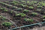 Полив огорода и приусадебного участка
